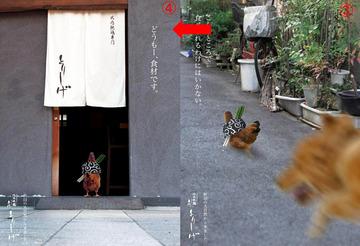 351-02_健気(けなげ)な比内鶏.jpg