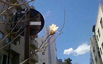 354_白い花が咲いてた♪.jpg