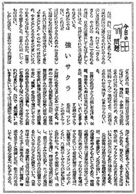 126_40-12-16_朝日夕_強いサクラ-A.jpg