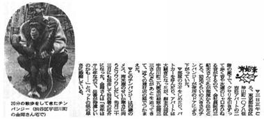 213_42-12-04_朝日_チンパンジー.jpg